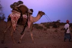 Dans le désert du Thar (Rajasthan-Inde)