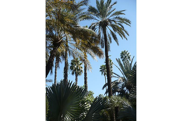 Le Jardin Majorelle - 4